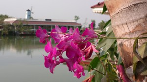 Orchids At Hua Hin Floating Market
