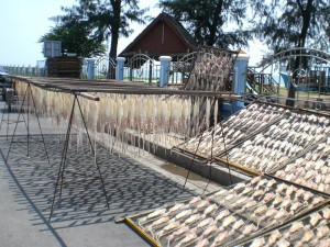 Squid Drying in Paknam Pran, Thailand