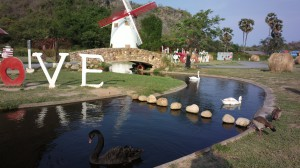 Swans at the Swiss Sheep Farm, Cha Am, Thailand